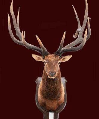 Deer Antlers of The World - The Raymond & Annie Hutchison Collection
