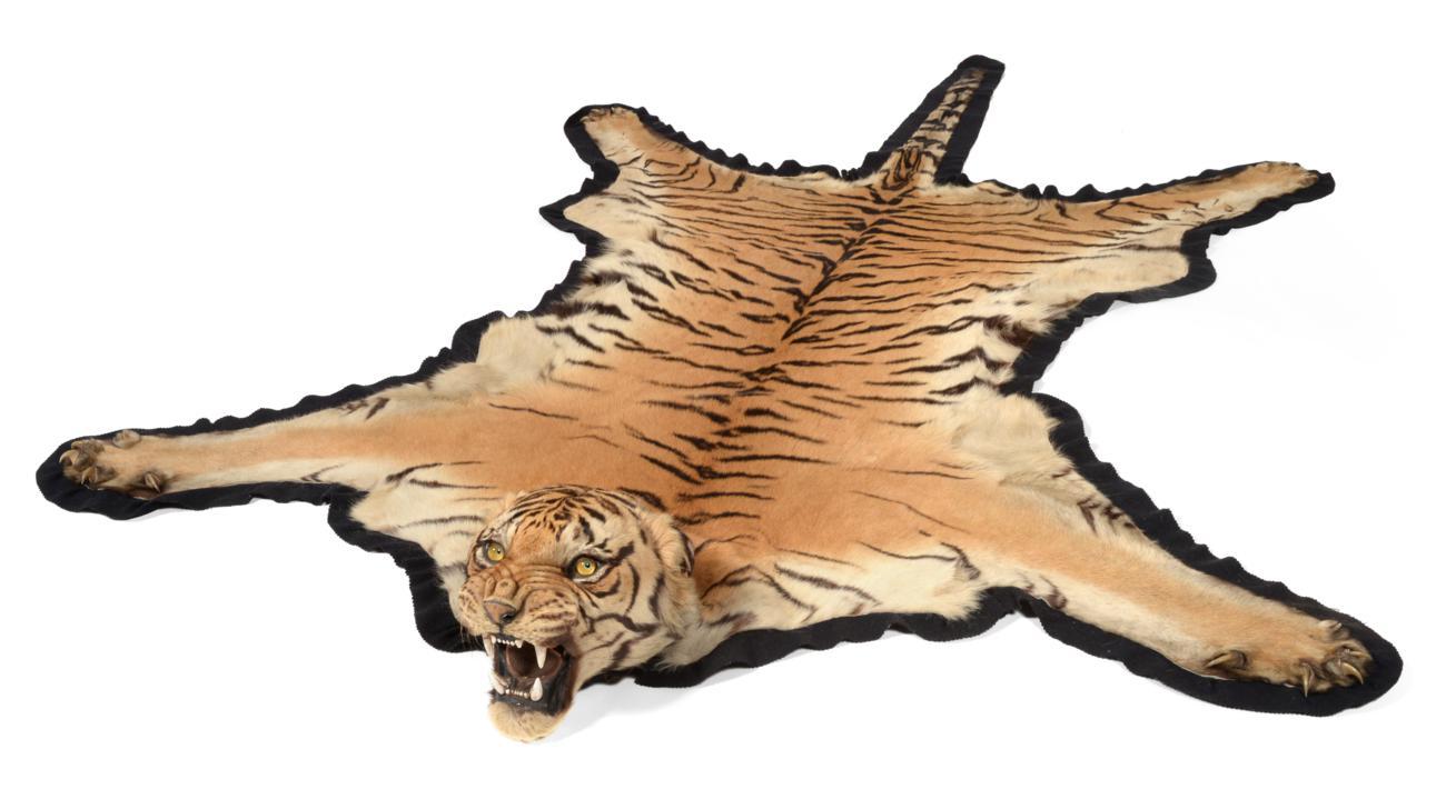 Lot 132 - Taxidermy: Bengal Tiger (Panthera tigris tigris), by Van Ingen & Van Ingen, Mysore, India, No...
