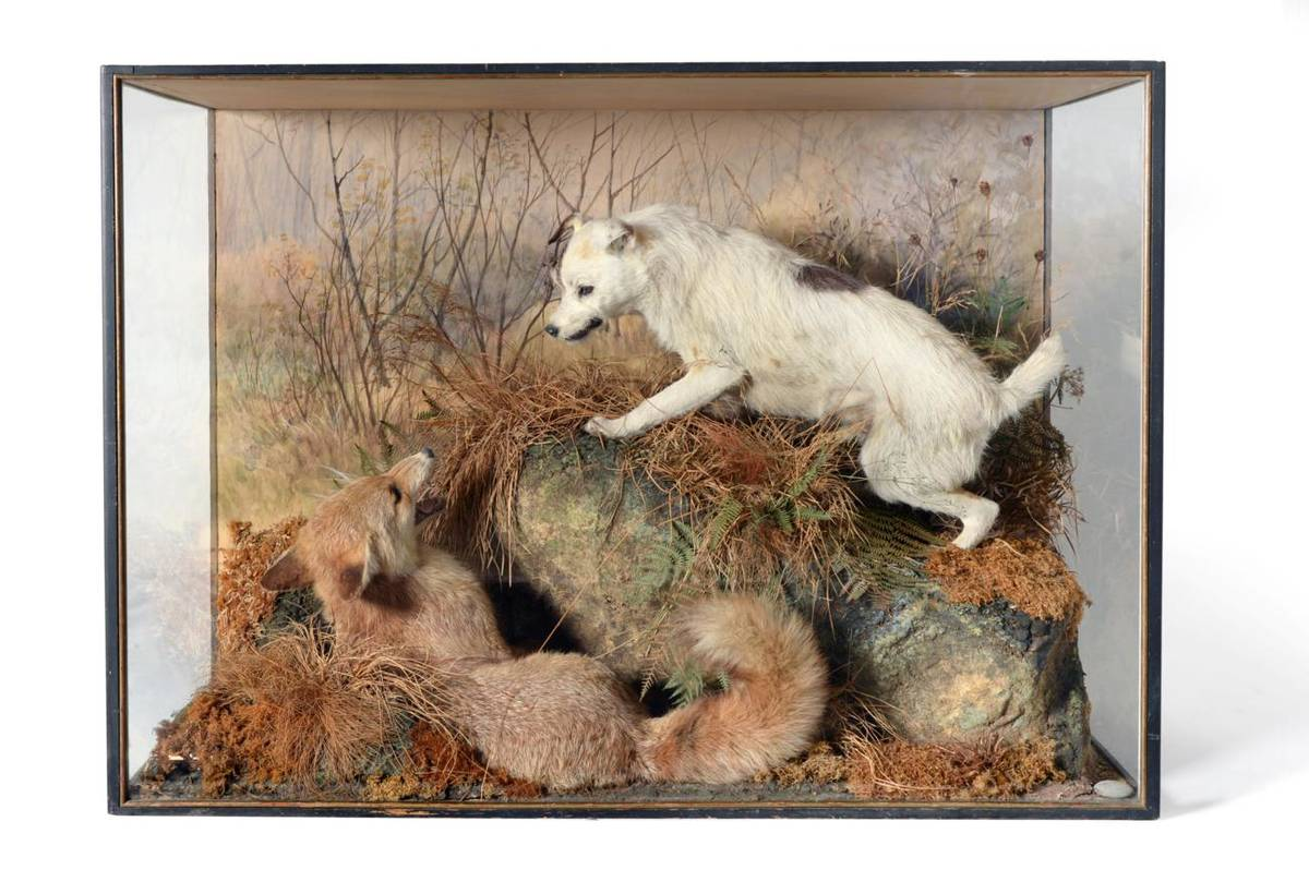 Lot 146 - Taxidermy: A Rare Diorama Cased Fox Terrier and Fox, by Peter Spicer, circa 1900, the full...