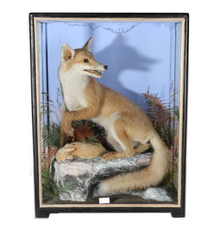 Lot 2025 - Taxidermy: A Victorian Cased Red Fox (Vulpes vulpes), by James Hutchings of Aberystwith, 1860-1942