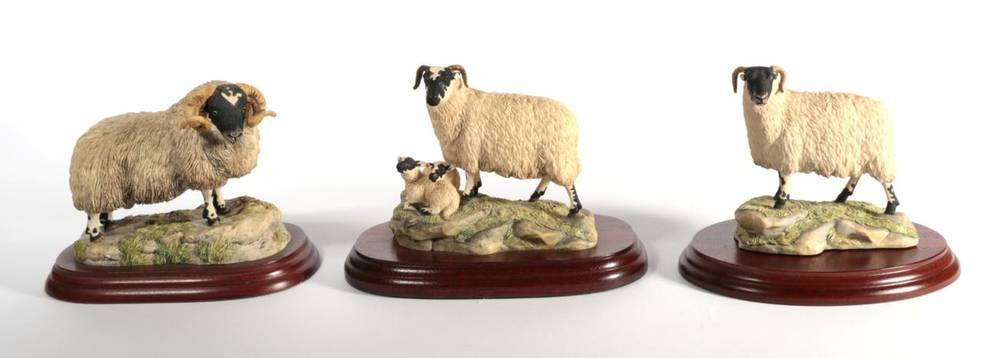 Lot 4 - ^ Border Fine Arts 'Black Faced Ewe' (Style One), model No. 117 by Ray Ayres, on wood base,...