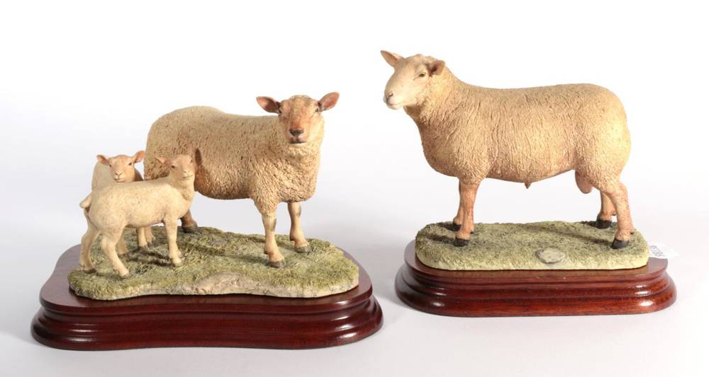 Lot 11 - ^ Border Fine Arts 'Charolais Ewe and Lambs', model No. L121 by Ray Ayres, limited edition 480/750