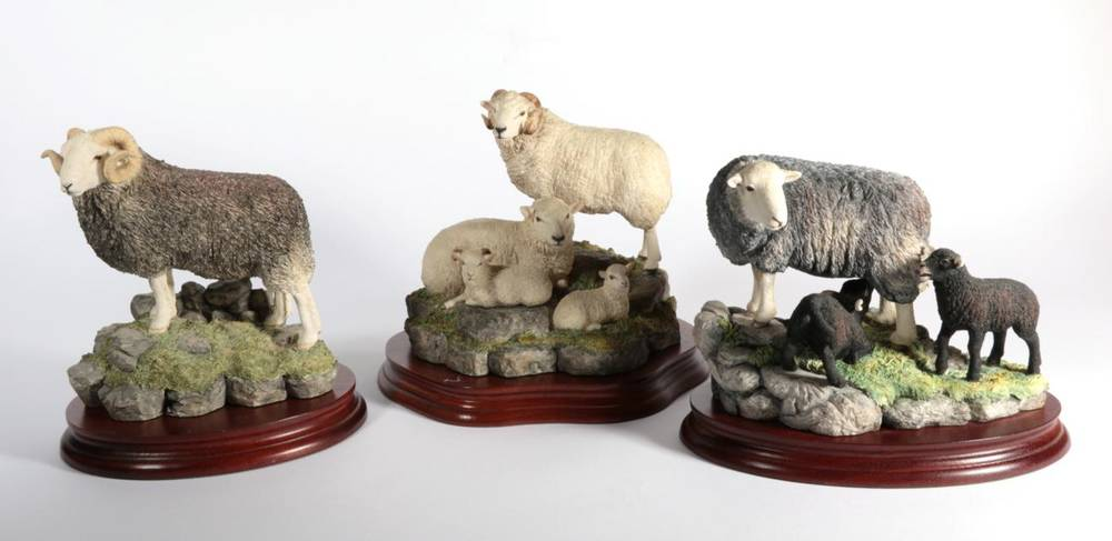 Lot 18 - ^ Border Fine Arts 'Herdwick Tup', model No. B0705 by Ray Ayres, limited edition 690/750, on...