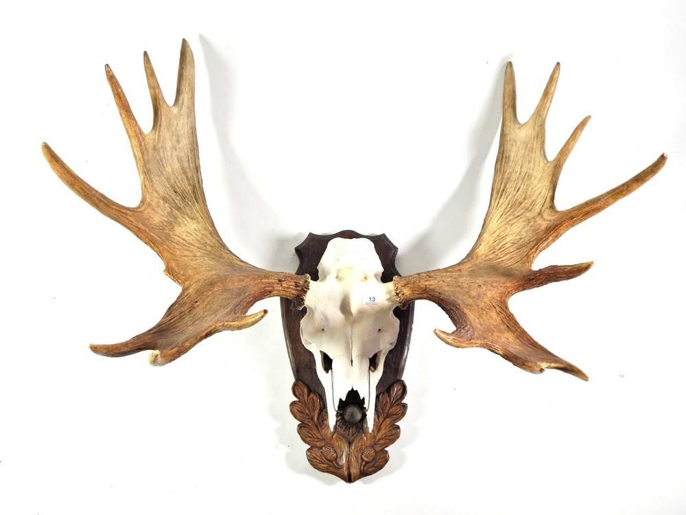 Lot 13 - Antlers/Horns: European Moose (Alces alces), circa 26/10/1981, Varmland, Sweden, Silver medal...