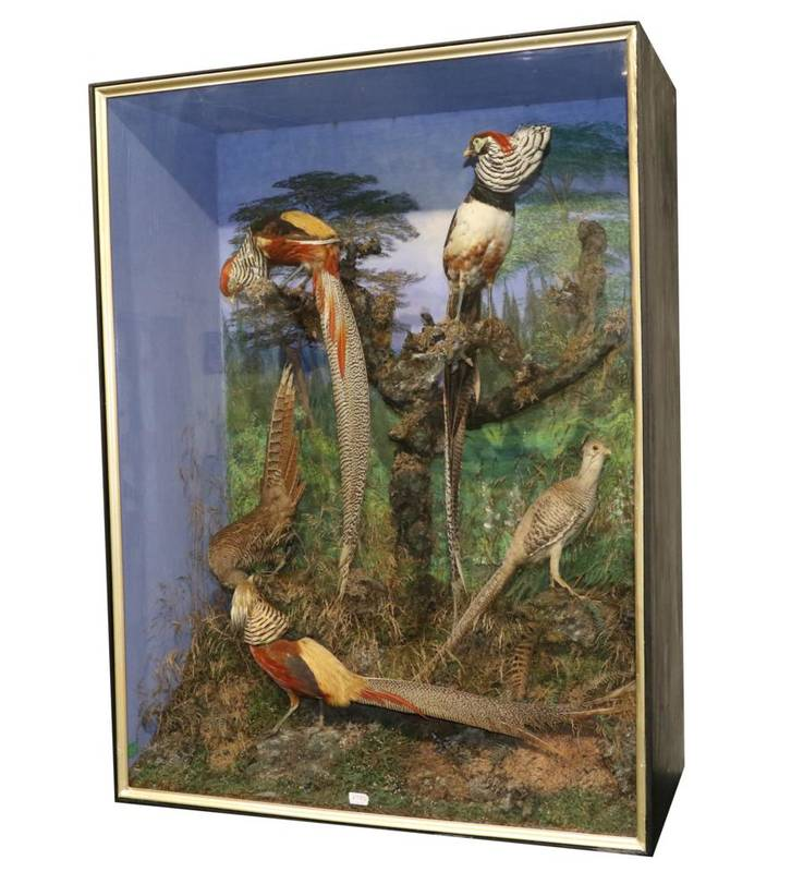 Lot 19 - Taxidermy: A Large Late Victorian Diorama of Asian Pheasants, by C Helstrip, 13, St Saviours Place