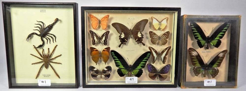Lot 41 - Entomology: A Collection of Asian Butterflies and Insects, circa 1960-70, two framed small...