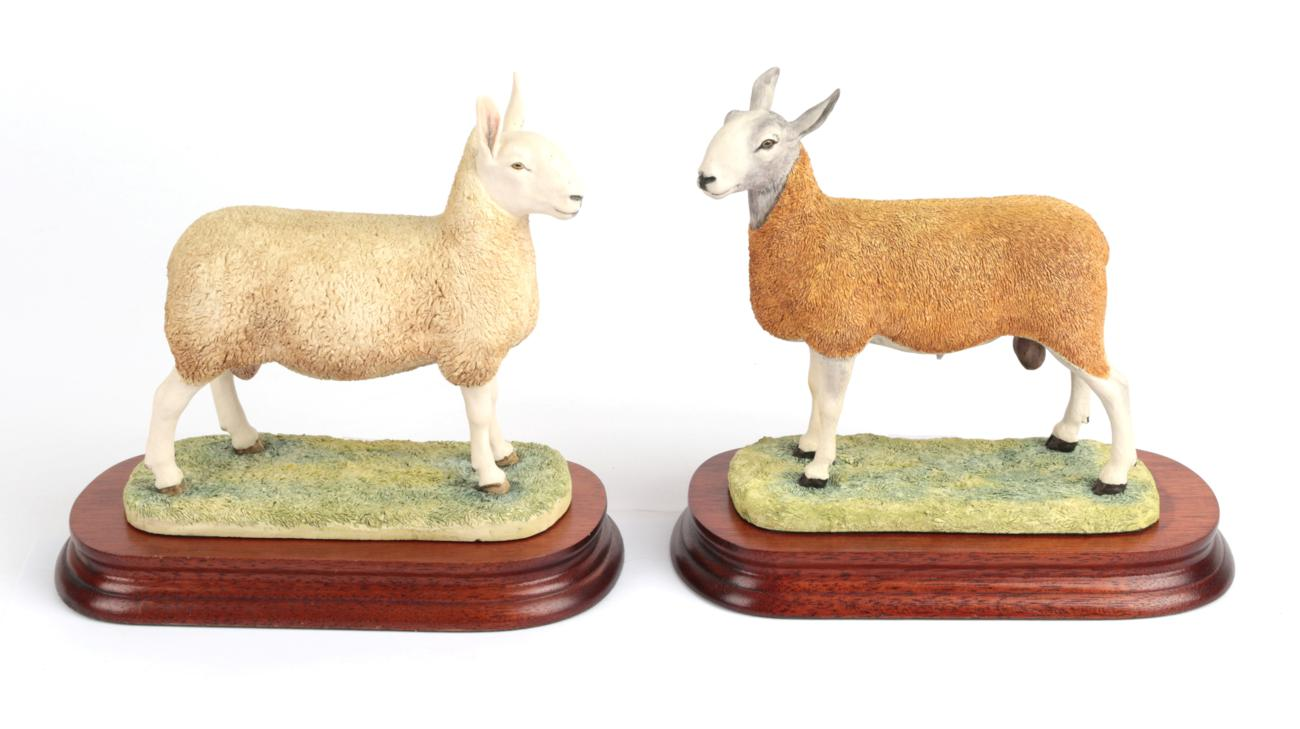 Lot 14 - Border Fine Arts 'Blue Faced Leicester Tup' (Style One), model No. B0149, limited edition...