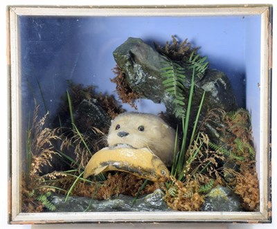 Lot 2065 - Taxidermy: A Cased European Otter (Lutra lutra), circa 1875, by Henry Shaw, Taxidermy, Salop, a...