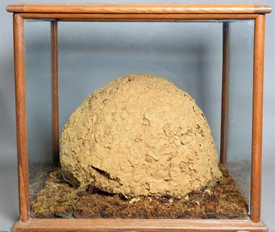 Lot 2067 - Natural History: A Large Hornets Nest (Vespa crabro), circa early 20th century, a large natural...