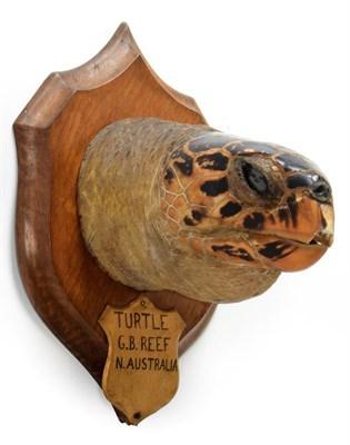 Lot 2072 - Taxidermy: A Large Hawksbill Sea Turtle Head (Eretmochelys imbricata), circa 1892, Great...