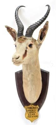 Lot 2081 - Taxidermy: A Pair of South African Springbok (Antidorcas marsupialis), circa May 11th 1929,...