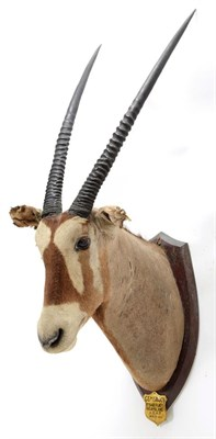 Lot 2086 - Taxidermy: A Pair of Gemsbox Oryx (Gazella gazella), circa 1931, Mount Babe Flats, N. Gamiland,...