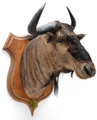 Lot 2087 - Taxidermy: Blue Wildebeest & Common Waterbuck, circa 1897, South Africa, an adult male Blue...