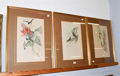 Lot 1000 - After John Gould, three hand-embellished ornithological prints, 50cm by 30.5cm (3)