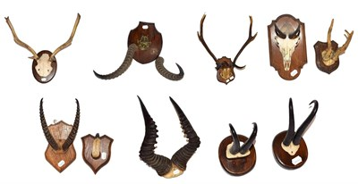Lot 3 - ~ Antlers/Horns: A Collection of African & European Game Trophy Horns & Antlers, comprising -...