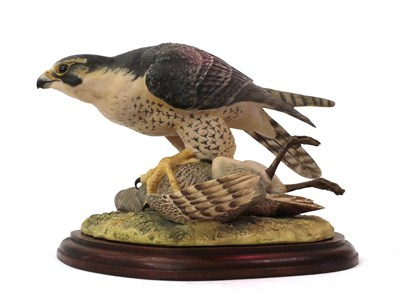 Lot 62 - Border Fine Arts 'Peregrine Falcon' (Style One), model No. L01 by Victor Hayton, limited...