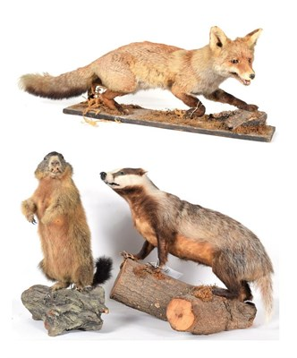 Lot 7 - Taxidermy: A Group of European Countryside Animals, circa late 20th century, comprising - full...