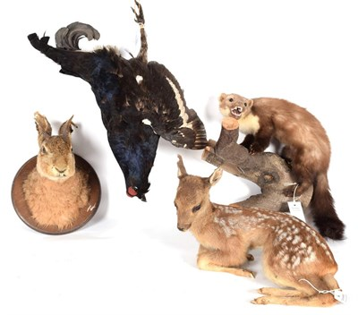 Lot 15 - Taxidermy: A Group of European Countryside Animals and Bird, circa late 20th century,...