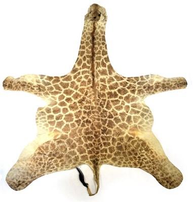 Lot 25 - Hides/Skins: A Southern Giraffe Hide, circa late 20th century, a juvenile Southern Giraffe flat...