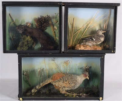Lot 31 - Taxidermy: Three Cased Animal & Birds, circa late 20th century, comprising - a cased adult...