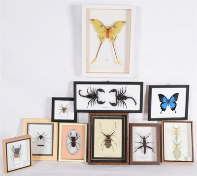Lot 34 - Entomology: A Collection of Various Insects, modern, comprising - two Leaf Insect's, Harlequin...