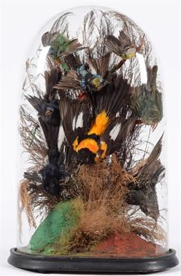 Lot 38 - Taxidermy: A Victorian Diorama of Tropical Birds, circa 1880-1900, a collection of eight...
