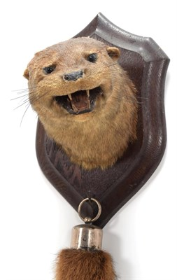 Lot 39 - Taxidermy: European Otter (Lutra lutra), circa 1920-1930, by Henry Murray, Naturalist's &...