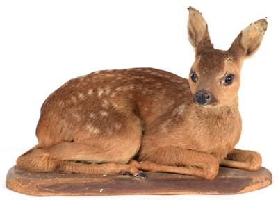 Lot 41 - Taxidermy: A European Fallow Deer Fawn (Dama dama), circa late 20th century, a full mount fawn...
