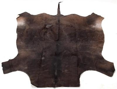 Lot 55 - Hides/Skins: Cape Buffalo Skin Rug (Syncerus caffer caffer), modern, South Africa, adult tanned...