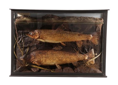 Lot 60 - Taxidermy: A Cased Pair of Brown Trout (Salmo trutta), by A.W. Ecutt, Naturalist & Taxidermist,...