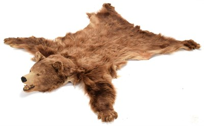 Lot 79 - Taxidermy: North American Brown Bear Skin (Ursus arctos), dated 2005, a young adult skin rug...