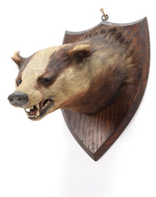Lot 81 - Taxidermy: European Badger (Meles meles), circa 1920-1930, by E.F. Spicer, Taxidermy, 58...