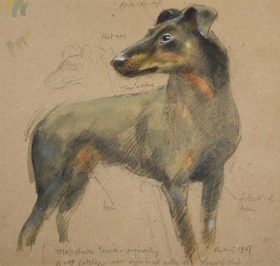 Lot 1040 - Harold Riley (b.1934)  ''Manchester Terrier- Originally a Rat Catcher- now resides in the...