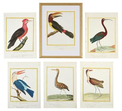Lot 1000 - After François-Nicolas Martinet (1731-1800) French Bird Studies from 'Histoire Naturelle des...