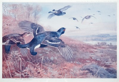 Lot 1004 - After Archibald Thorburn FZS (1860-1935) Black Grouse in flight Signed in pencil, a colour...