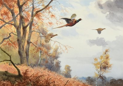 Lot 1014 - John Cyril Harrison (1898-1985) Pheasants breaking cover Signed, watercolour, 32.5cm by 46.5cm...