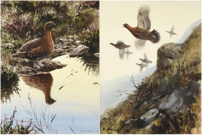 Lot 1016 - Rodger McPhail (b.1953) Covey of Grouse in flight Grouse in contemplation Signed, watercolour...