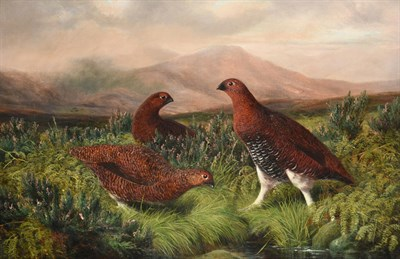 Lot 1032 - Benjamin (Lester) Hold (1839-1917) Grouse in a heather moorland Signed, oil on canvas, 48.5cm...