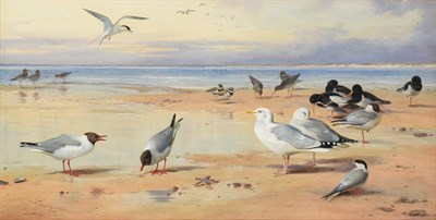 Lot 1076 - Archibald Thorburn FZS (1860-1935) ''Sea Birds'' Signed and dated 1908, watercolour, 54cm by...