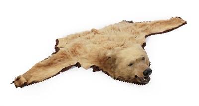 Lot 46 - Kodiak Bear (Ursus arctos middendorffi), circa 1913, by Rowland Ward, half rug with head mount, the