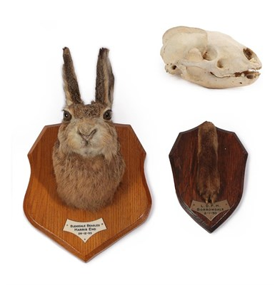 Lot 48 - Taxidermy: European Hare (Lupus lupus), dated 26th December 1953, Bleasdale Beagle, by Thomas...