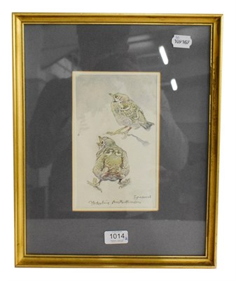 Lot 1014 - Dr Eric Arnold Roberts Ennion (1900-1981) Fledgling Mistle Thrushes, signed watercolour and pencil