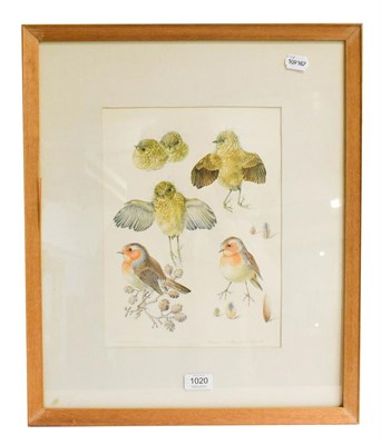Lot 1020 - Mildred Eldridge (1909-1991) Robin, signed watercolour and pencil, 32.5cm by 24cm, Artist's...