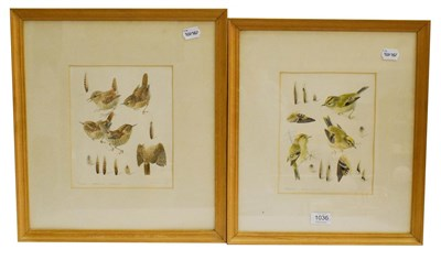 Lot 1036 - Mildred Eldridge (1909-1991) a pair of watercolour and pencil ornithological studies, to...
