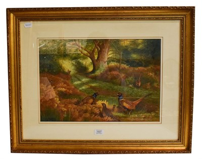 Lot 1007 - After Archibald Thorburn FZS (1860-1935), Pheasants in woodland, bears signature and date 1901,...