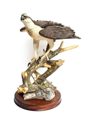 Lot 65 - Border Fine Arts 'Prince Of The Loch' (Osprey), model No. B0651 by Richard Roberts, limited edition