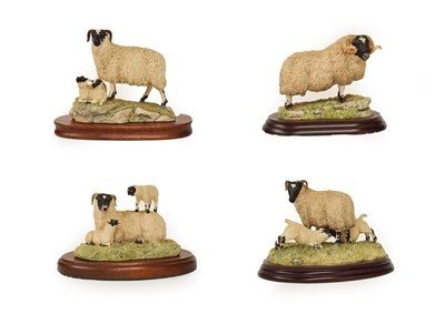 Lot 70 - Border Fine Arts Sheep Groups Including: 'Blackfaced Ewe and lambs' (Style Two), model No. 124,...