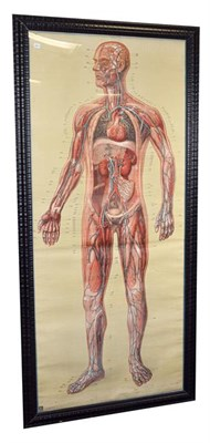 Lot 3090 - Full Size Medical Poster depicting the human circulatory system with arteries and veins...