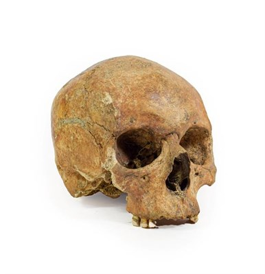 Lot 3091 - Medieval Upper Human Skull   The skull was acquired by the vendor from an archaeologist in...