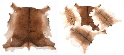 Lot 56 - Hides/Skins: Red Deer & Fallow Deer Tanned Hides, modern, three professionally tanned Fallow...